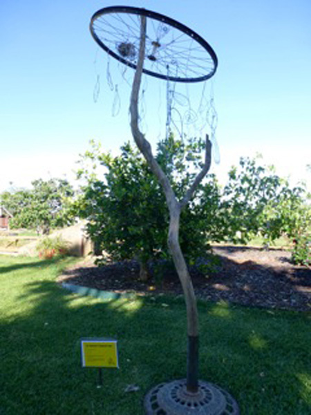 St Mary's Primary School - Drought Tolerant Tree